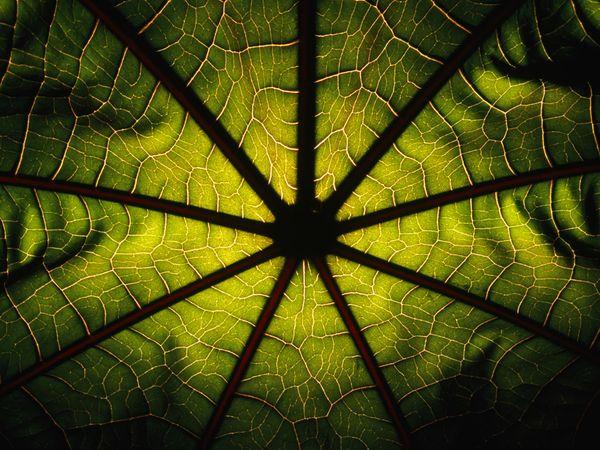 Аль-Масад (Пальмовые волокна)